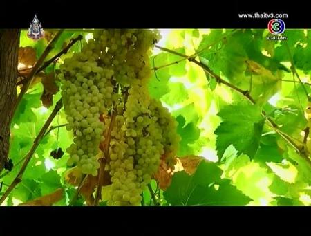 ดูรายการย้อนหลัง อุตสาหกรรมไวน์ เมืองจางเย่ ประเทศจีน