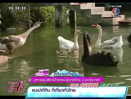 ดูละครย้อนหลัง แจ๋วพาเที่ยว - มหกรรมสัตว์ปีกแห่งประเทศไทย จ.ฉะเชิงเทรา