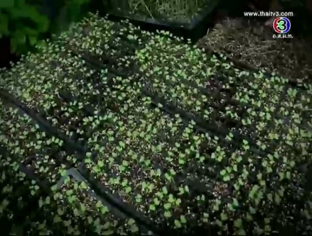 ดูรายการย้อนหลัง ศูนย์เรียนรู้เกษตรอินทรีย์ชีวภาพ
