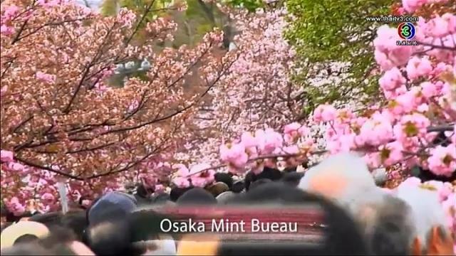 ดูรายการย้อนหลัง เซย์ไฮ (Say Hi) - Osaka,Mint Bueau, Japan