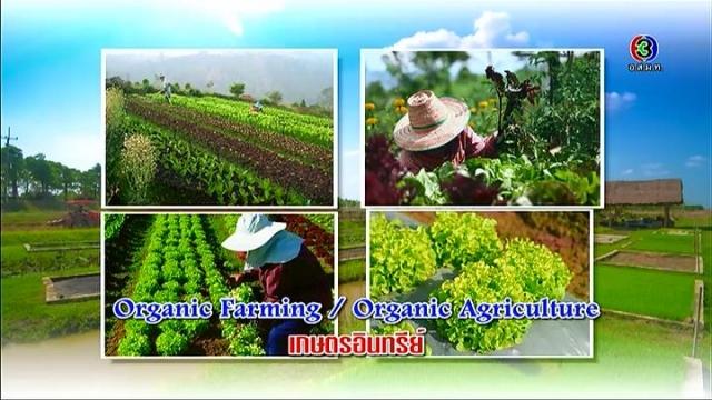 ดูละครย้อนหลัง ศัพท์สอนรวย | Organic Farming / Organic Agriculture = เกษตรอินทรีย์