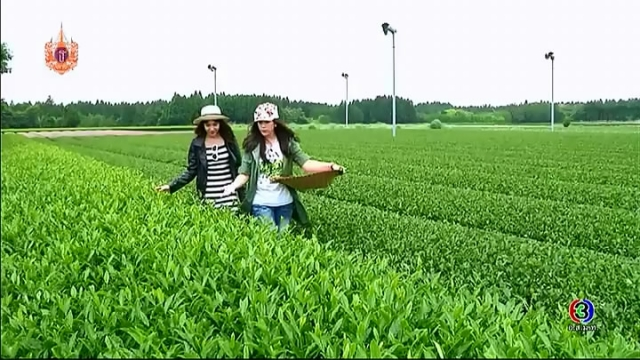 ดูรายการย้อนหลัง เซย์ไฮ (Say Hi) | Haru Ichiban Tea Farm lbusuki,kyushu