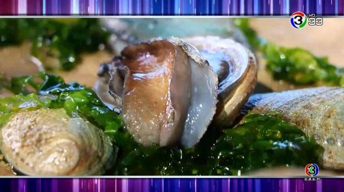 ดูรายการย้อนหลัง ครัวคุณต๋อย | หอยเป๋าฮื้อ จ.ภูเก็ต บริษัทภูเก็ตเป๋าฮื้อฟาร์ม จำกัด